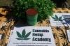 <b>cannabishempaccademy.jpg